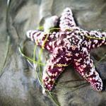 Cuento de las estrellas de mar