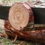 El cuento del leñador: afilar la sierra